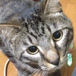 猫 夏のエアコンなしは危険?お留守番は何度に設定がいい?