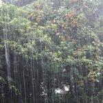 琵琶湖…大雨翌日はバス釣れるのか?ポイントとルアーのカラーがキモ?